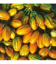 More about Lilek pruhovaný - prodej semen lilku - 6 ks