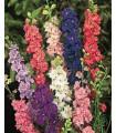 Stračka zahradní hyacintokvětá - směs barev - Deplhinium ajacis - semena Stračky - 0,8 gr