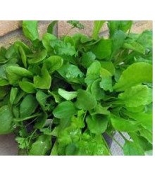 More about Mix provensálského salátu - semena salátu - 0,1 gr