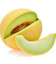 Meloun galia Exelor F1 - Cucumis Melo - osivo melounu - 5 ks