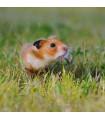 Tráva pro křečky - Křečkova zahrádka - semena trávy - 2 gr
