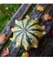 Okrasné tykvičky Koruna směs - prodej okrasných tykviček - semena - 2 gr