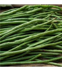 Fazol keříčkový Odeon - Phaseolus vulgaris var. nanus - osivo fazolu - 20 ks