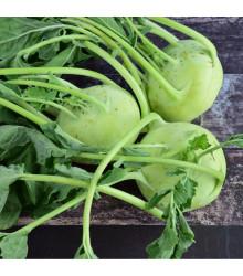 BIO kedluben Noriko - Brassica Oleracea Convar. Gongylodes - bio osivo kedlubny - 80 ks