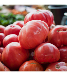 Rajče Oxheart Pink - Lycopersicon esculentum - osivo rajčat - 5 ks