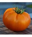 Rajče - Wellington F1 - semena rajčat