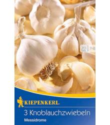 Sadbový česnek Messidrome - Allium sativum - napaličák - 3 ks v balení