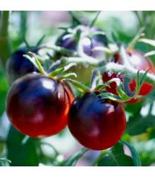 More about Rajče černé cherry - Lycopersicon esculentum - osivo rajčat - 6 ks