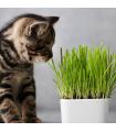 Tráva pro kočky- semena trávy pro kočky- 4 gr