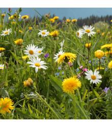 Horská louka - semena lučních květin - 50 g