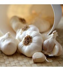 Sadbový česnek Flavor - Allium sativum - nepaličák - 3 ks v balení