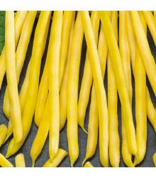 Fazol keříčkový Dior - Phaseolus vulgaris - osivo fazolu - 65 ks