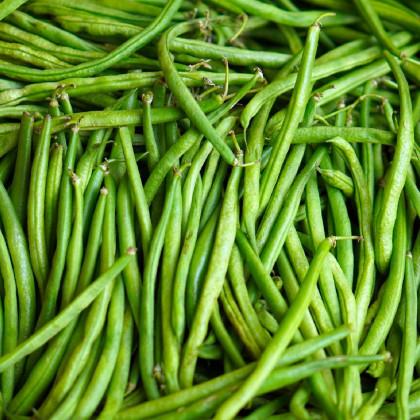 Fazol keříčkový Delinel - Phaseolus vulgaris - osivo fazolu - 20 ks